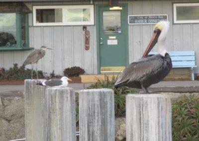 Pelican and Heron