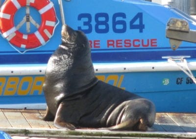 Sea Lion HP Boat 10-28-15 (1)